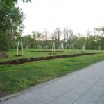 Poleňáci sází stromy II.
